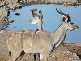 Reisen Afrika Namibia Etosha Pfanne