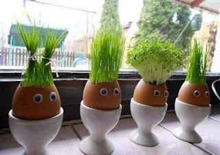 Idea Para Reciclar Cascaras de Huevo