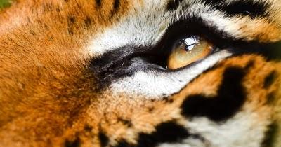 Du kannst es testosteron steigern zum tiger werden in - Steigerung testosteronspiegel ...