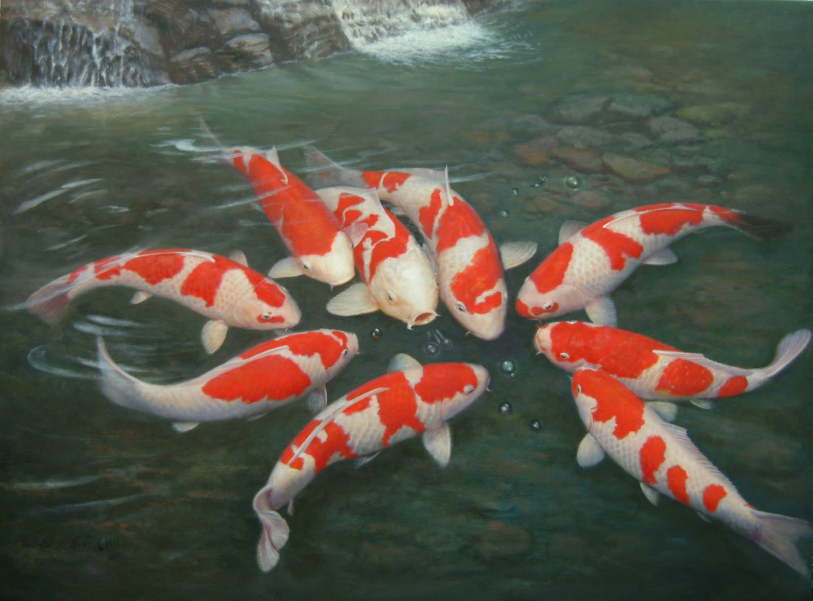 Do your homework better and faster for Large koi fish