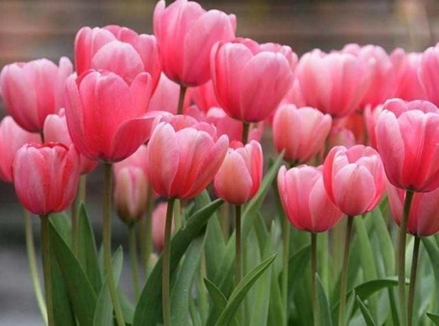 Flores silvestres - Tipos de flores silvestres ...