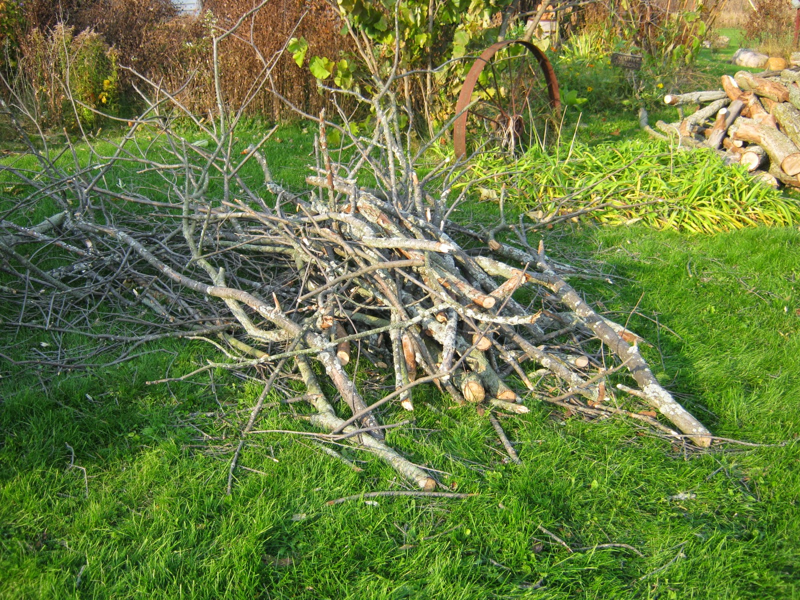 how to cut down a small dead tree