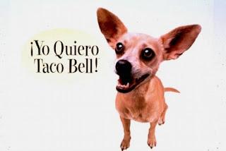 perrito chihuahua yo quiero mi taco bell