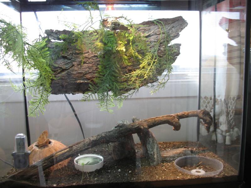 Small Pet Care Long Tail Grass Lizards And Anoles Terrarium