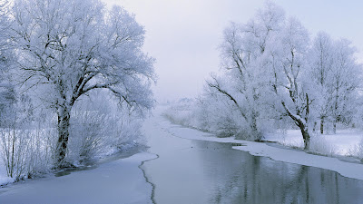 HD Nature Wallpaper white beauty