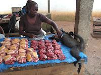 Cientistas alertam que comer carne de primata pode causar 'próximo HIV'