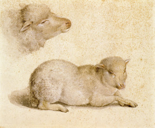 Study of Resting Lamb and Head of Lamb by Hans Holbein the Younger