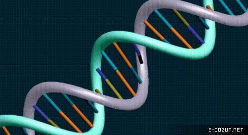 İnsanın DNA'sıyla şempazelerinki arasındaki benzerlik yüzde 98,4, salyangozunkiyle benzerliği ise yüzde 70.