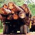 Tráfico de madera aumentó en el 2011
