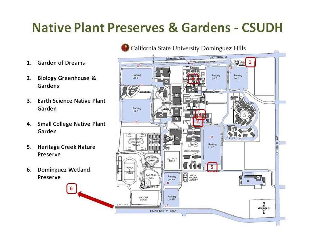 Native Plants At CSU Dominguez Hills Map Native Plants At CSUDH - Csu campus map