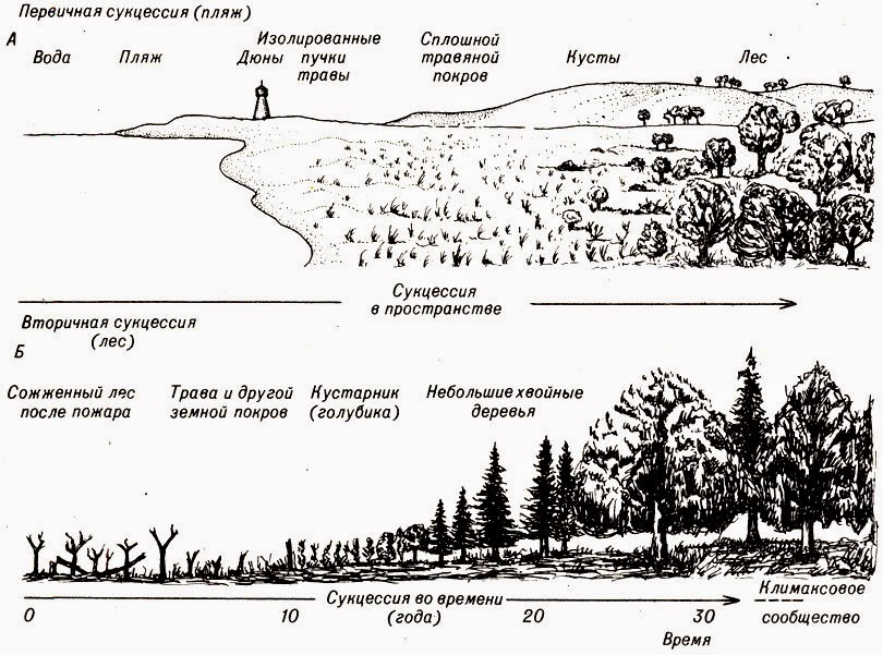 analysis of the ecological succession in recent years