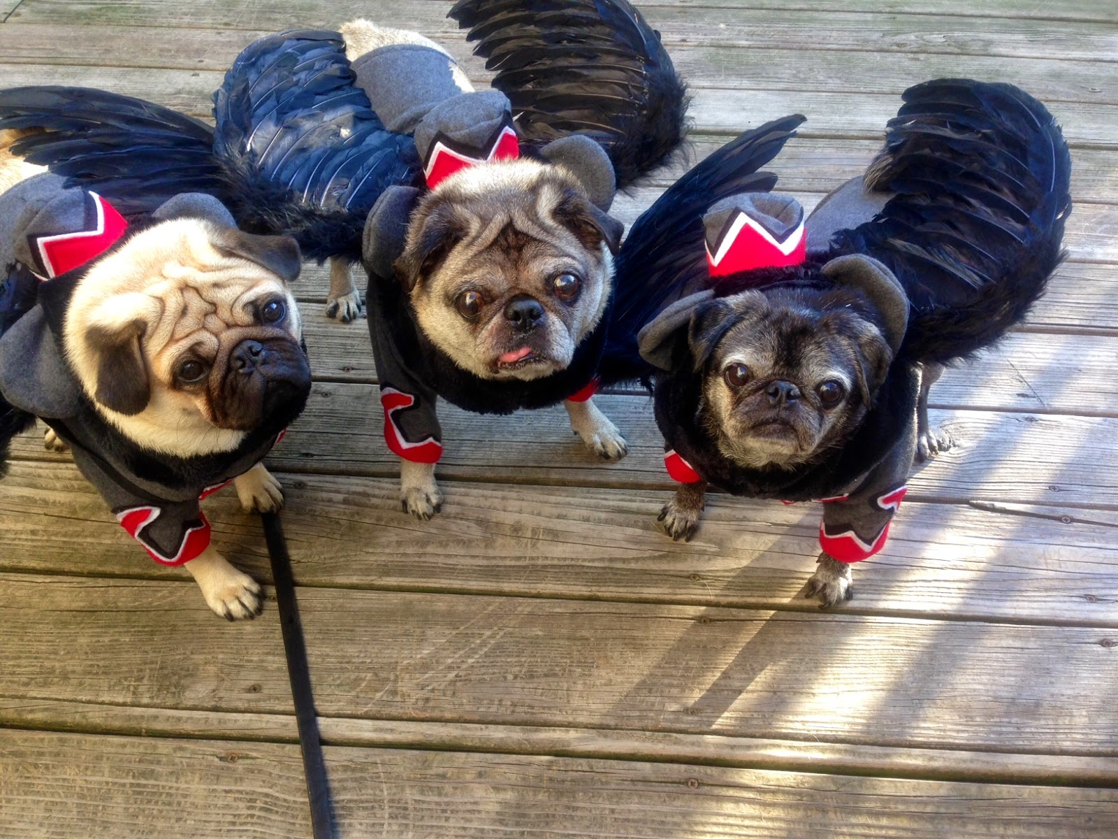 Retro Rover: Pug-O-Ween-Flying Monkeys!!!!!!!!