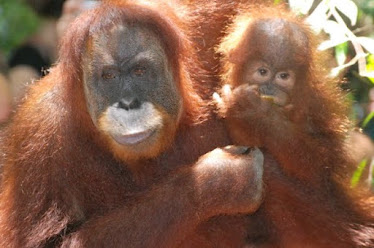 Jungle men (orang Utan)