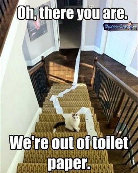 funny toilet paper cat
