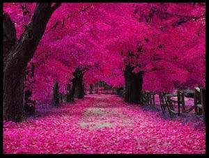 En el amor no todo es color de rosas