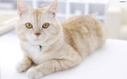 4) top 10 picture of cute cat coco