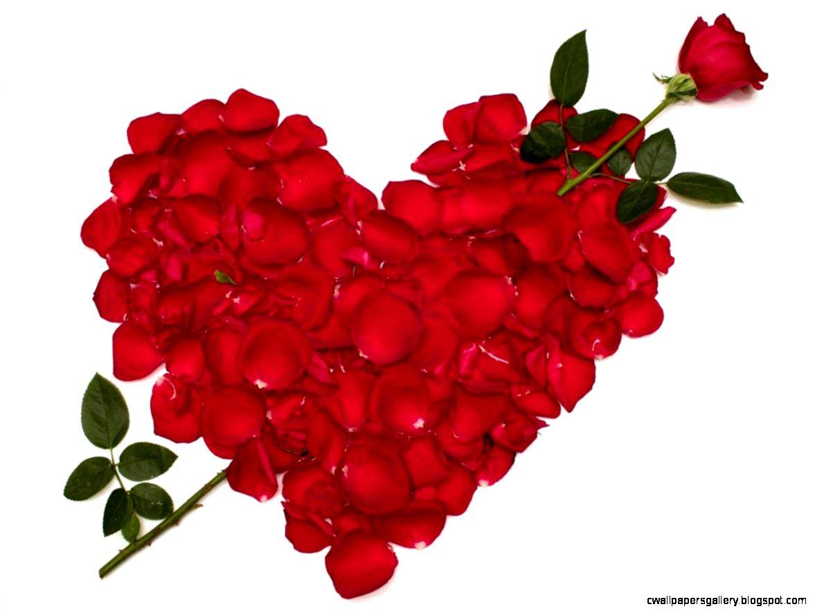 Animated Rose Photos 07544   Baltana