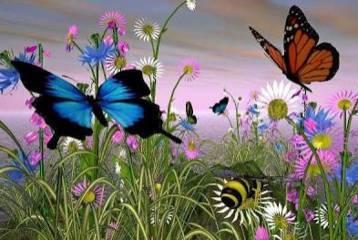 Misteri dan Mitos kupu-kupu di masyarakat