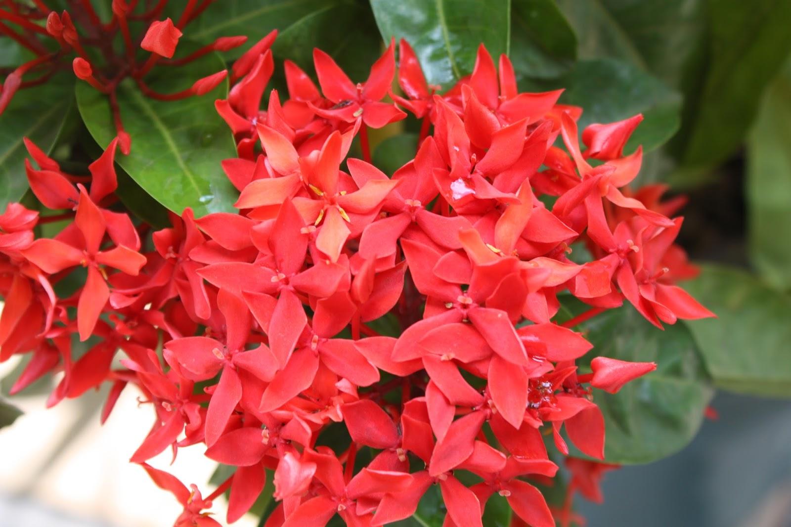 Arbustos tropicais que suportam o frio intenso plantas e for Especies de arbustos