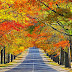 Colorful Trees in City Road wallpapers