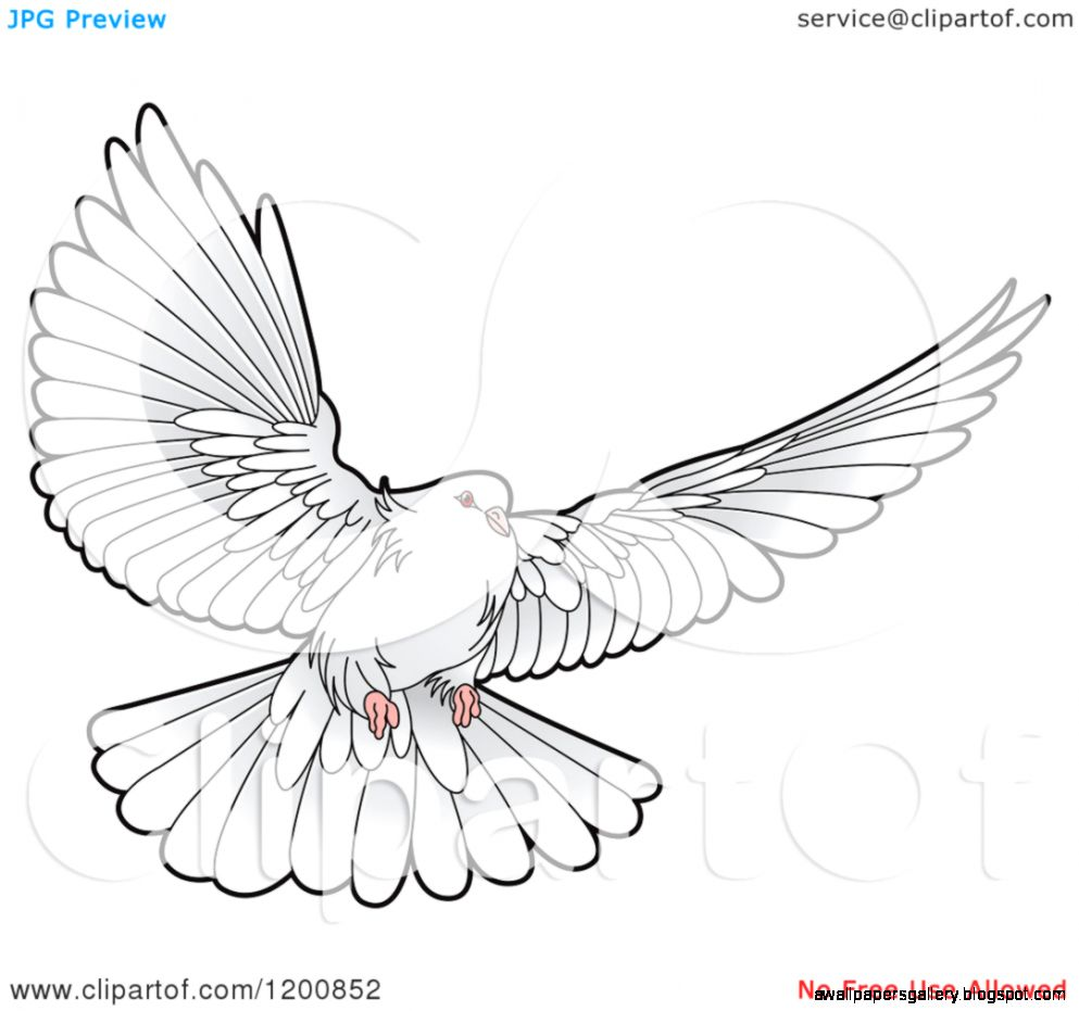 Line Drawing Dove : Flying dove drawing wallpapers gallery