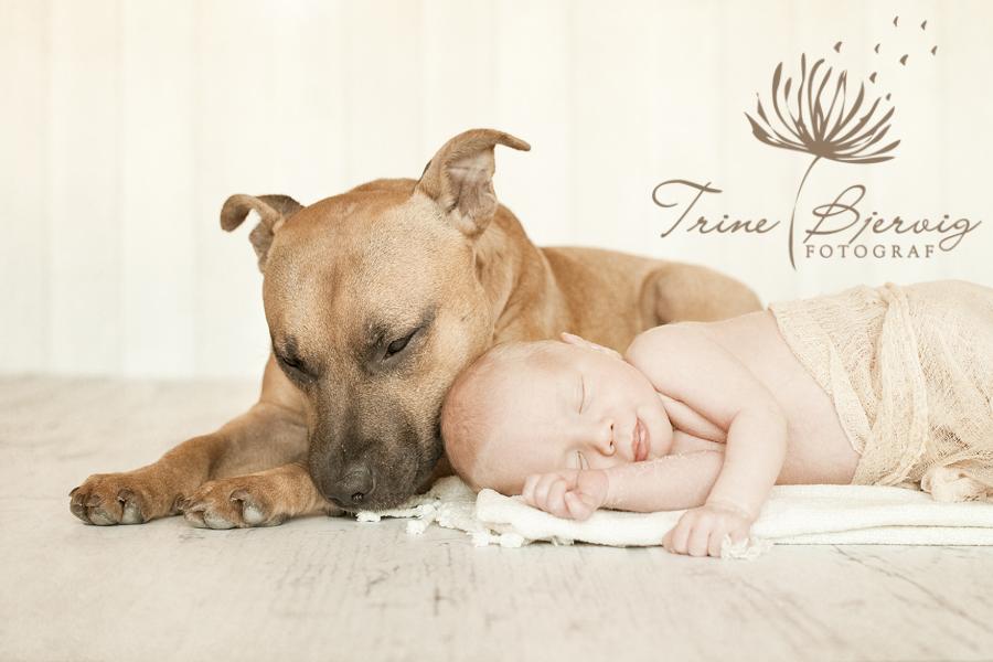 Nyfødt baby med hund - fotografert av nyfødtfotograf Trine Bjervig i Tønsberg, vestfold