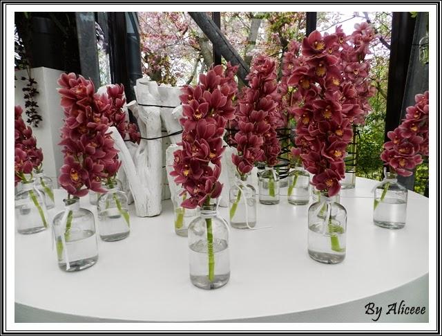 orhidee-visinii