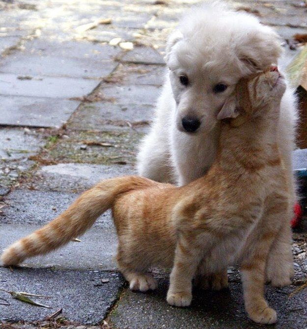 Top 5 Cat And Dog Friendship Stories