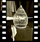 """Dame oiseau"""