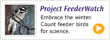 Join Project FeederWatch
