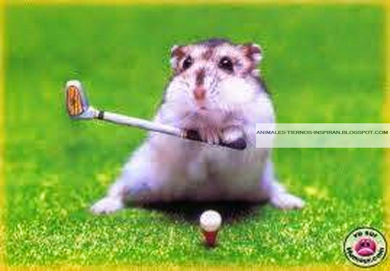 Animales Tiernos Inspiran: imágenes de animales bebes pequeños