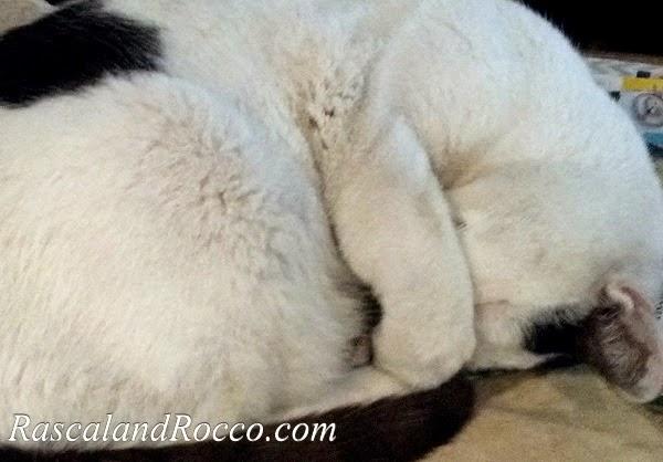 Rocco attempts murder? #catattack