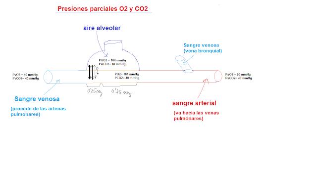 presiones parciales oxígeno
