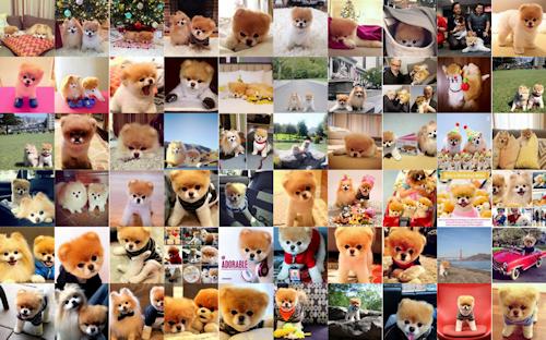 60 fotografías del perrito más hermoso del mundo llamado Boo - The World's Cutest Dog