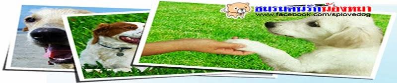 SP Love Dog บทความ ความรู้เรื่องหมา