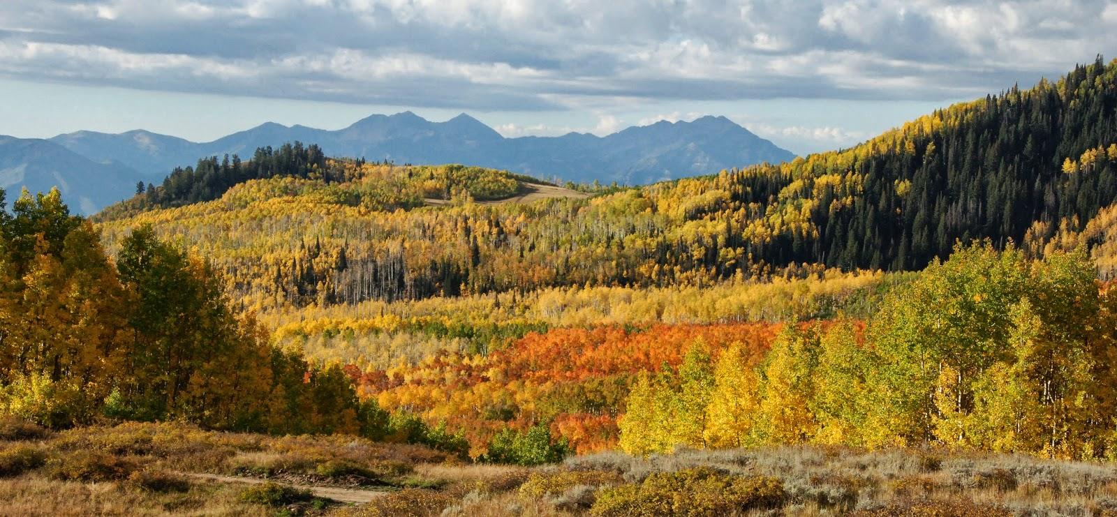 fall colors, empire pass, alpine loop, utah
