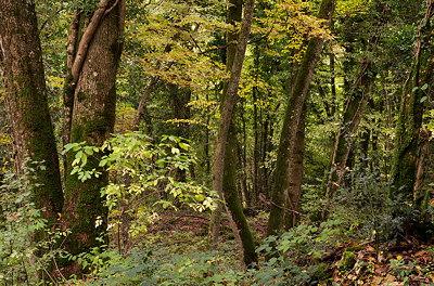 A quiet woodland in autumn