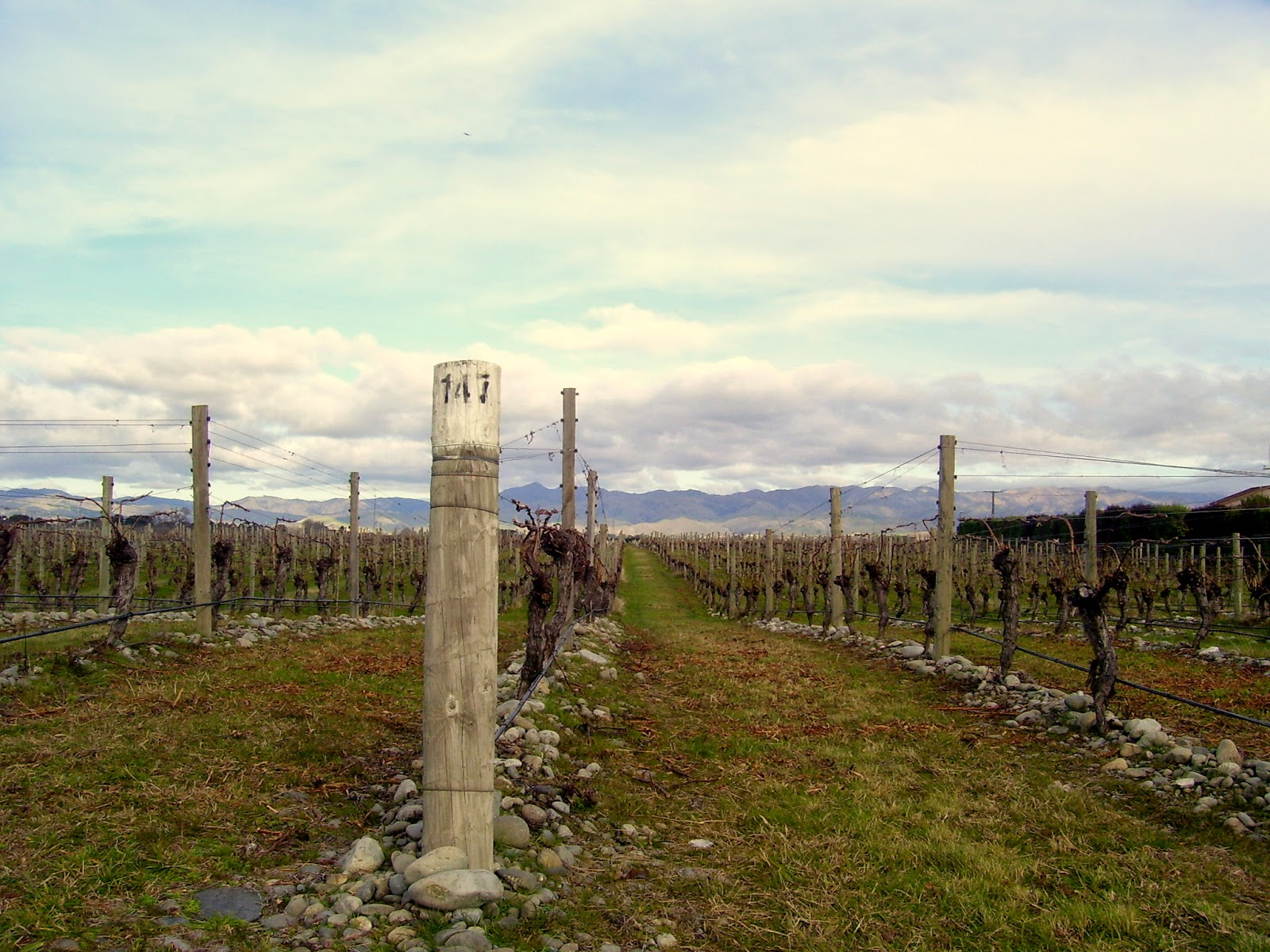 Marlborough Wine Region - a winter snapshot