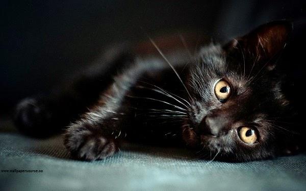 Photo adorable de chat noir