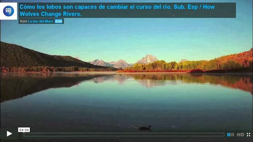 http://lavozdelmuro.com/asombroso-como-unos-lobos-son-capaces-de-cambiar-el-curso-de-un-rio/#