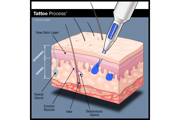 How ink is applied to the skin during tattooing best for Process of tattooing