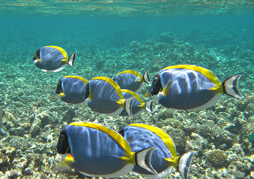 Seychelles - Oceano Índico - Um dos destinos mais desejados
