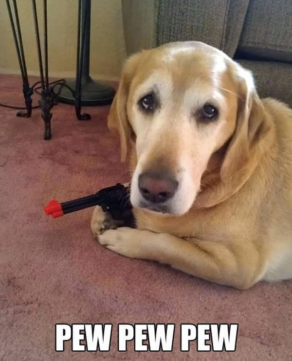 Funny picture of golden retriever dog holding a gun