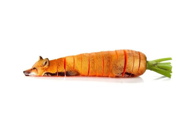 Sarah DeRemer, Animal Food