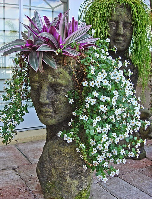 Plantas y peinados terrazas y jardines fotos de jardines for Fotos de plantas en macetas