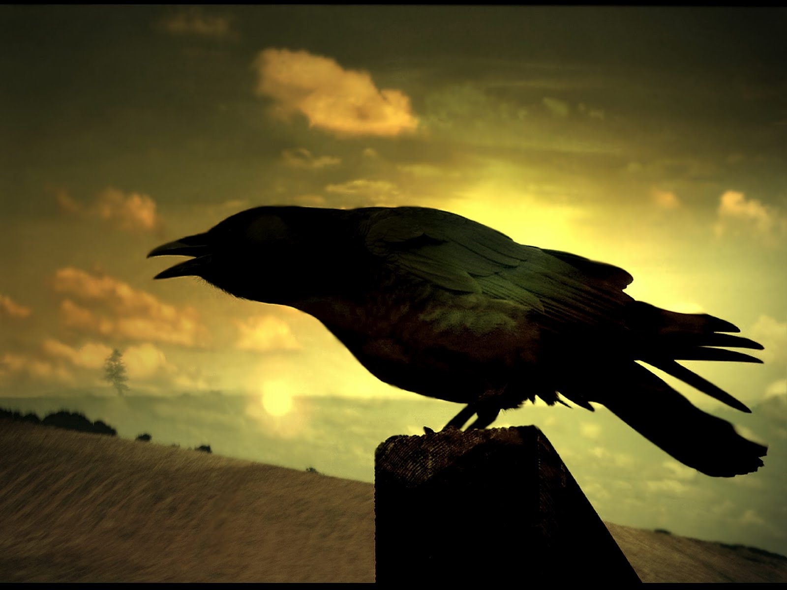 Evil crow wallpaper - photo#9