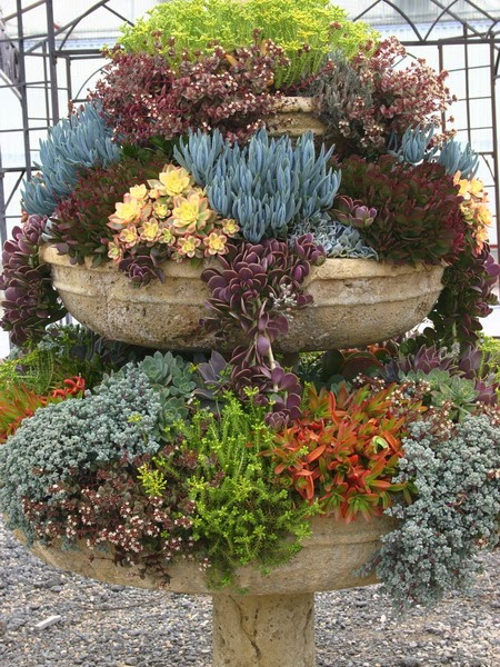 40 unique succulent gardens great ideas for apartments for Garden design using succulents