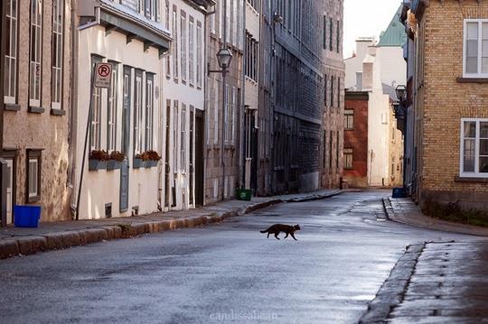 cat crossing the street