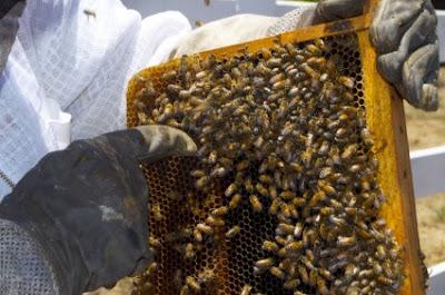 Πρόγραμμα βελτίωσης μελισσοκομίας 2015