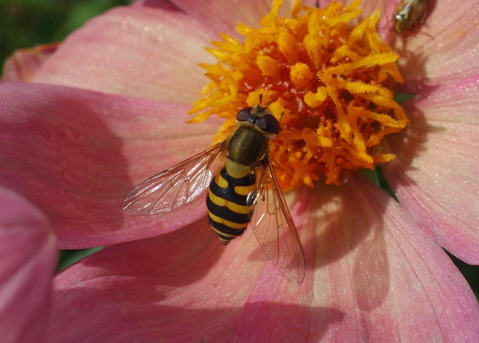 Urban Pollinators: March 2014